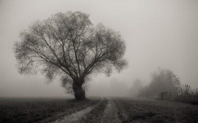 Der Herbst, der Herbst der Herbst ist da – aber er macht mich ja sooo müde!