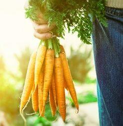 Bioakkumulation von Giftstoffen: ein ernstes Problem für Gesundheit und Umwelt