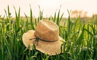 Die Wichtigkeit des Darms bei Heuschnupfen und anderen saisonalen Allergien